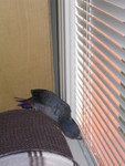 sneaking off to taste the blinds