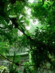 Osher Rainforest