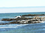 sea lions at Tide Pool Beach